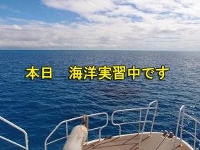 海洋中のコピー