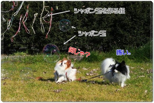 2IMG_0565.jpg