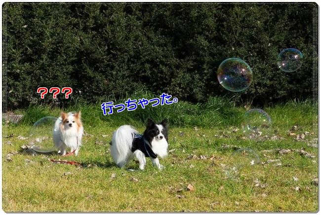 2IMG_0572.jpg