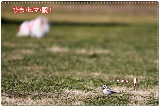 2IMG_5367.jpg