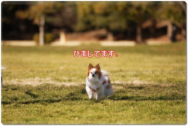 2IMG_5370.jpg