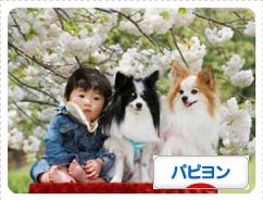 blog_top.jpg