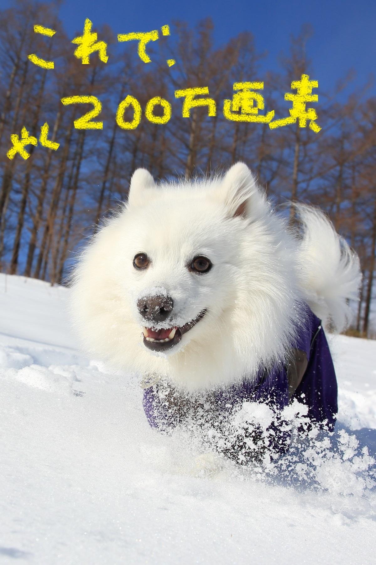 2K5A4247_20160203125513e0c.jpg
