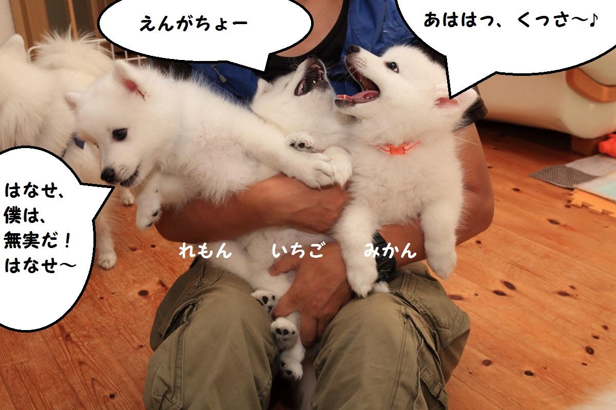 4_20151211113112f8b.jpg