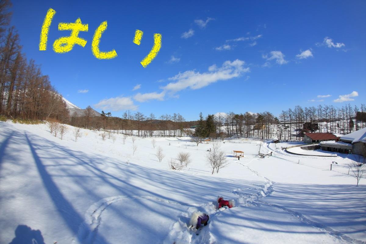 4_2016020208065987a.jpg