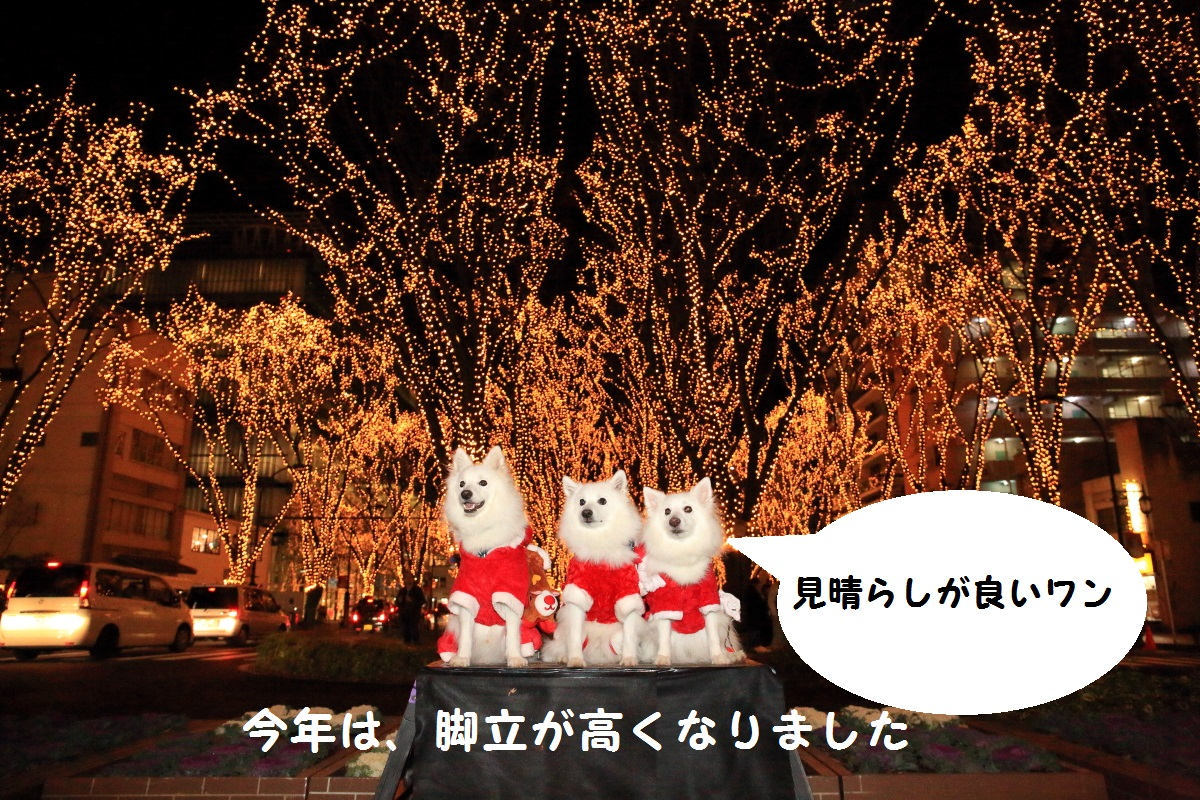 5_201512210119594de.jpg