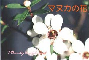 manukaflower.jpg