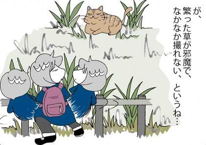 ネコさん1