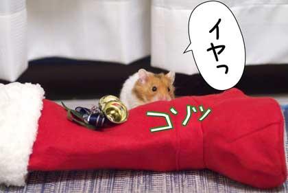ネコさん7