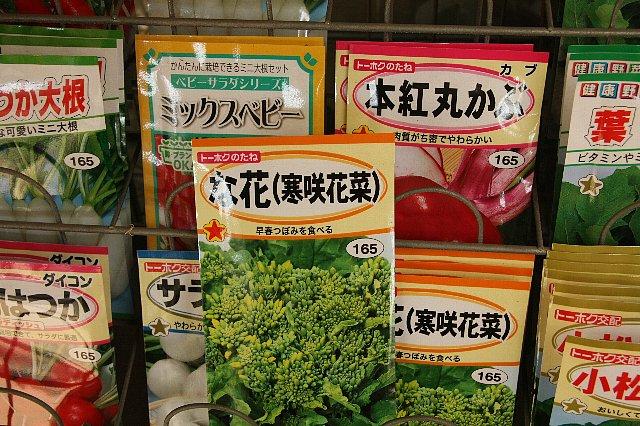寒咲き花菜3