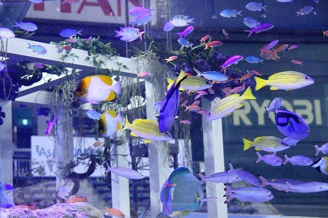 ちゅら海水族館2