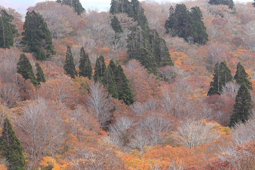 晩秋のブナ林