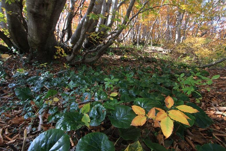 おしん林の林床