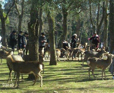 2-11 奈良公園へ 1