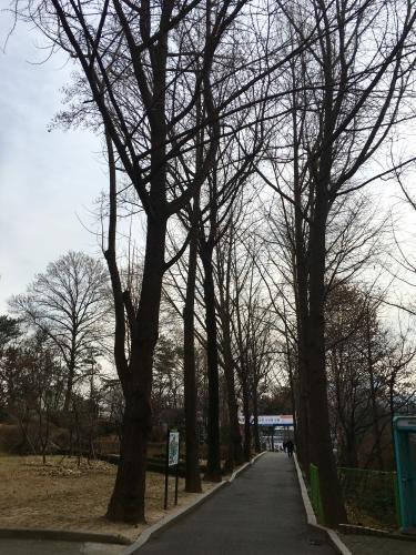 冬のキャンパスの景色もいいものですㅎ