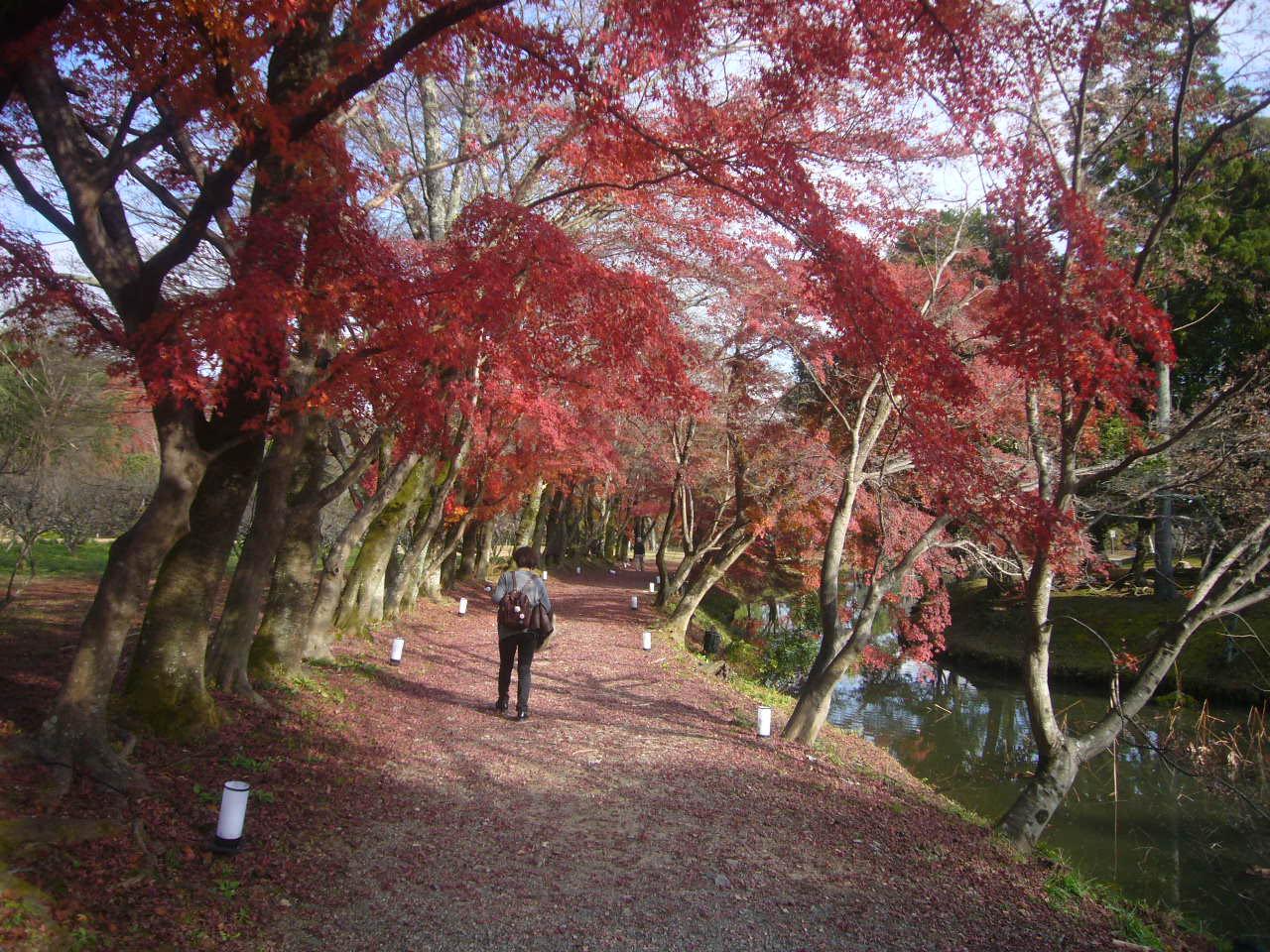 大沢池辺紅葉 H27.12.14