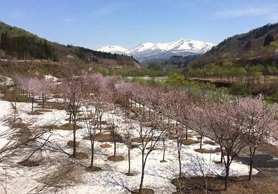 ooisawa20125012.jpg