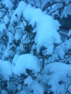 この冬2度目の寒波