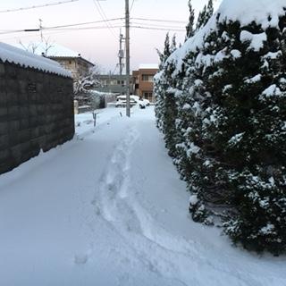 H28年1月25日の積雪