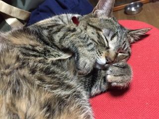 おにゃんてぃ 寝る 2