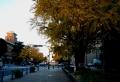 夕暮れの日本大通り(左は神奈川県庁)