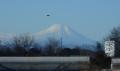 富士山とカラス