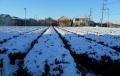 茶畑の雪①