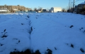 茶畑の雪②