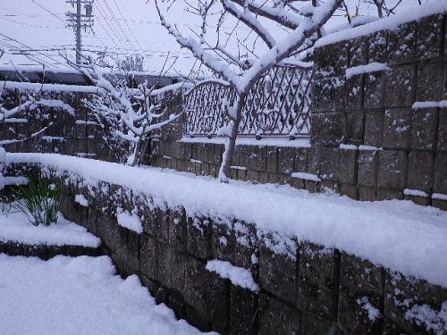 雪 2016 1 20-1