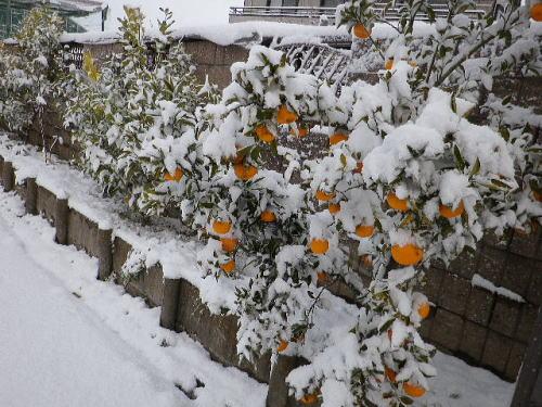 雪 2016 1 20-3