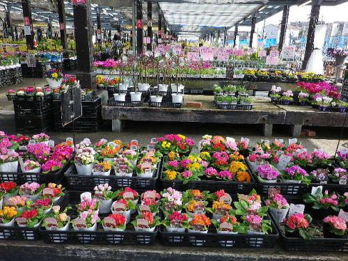 花市場 2016 2 14-1