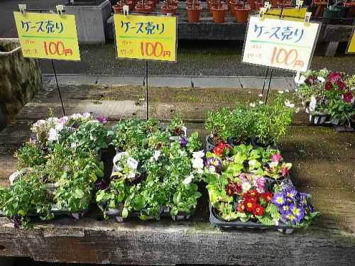 花市場 2016 2 14-2