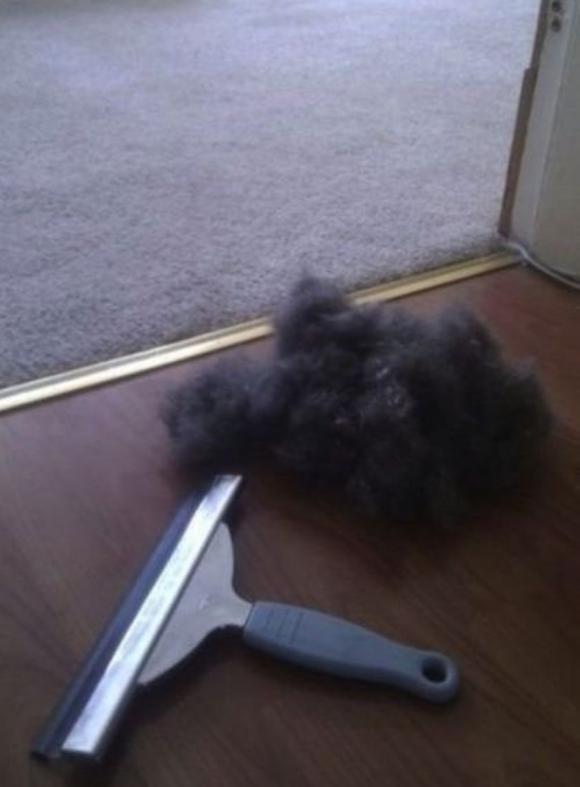 カーペットに着いたペットの毛の取り方!