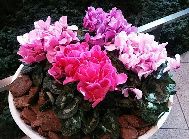 花の階段③-1