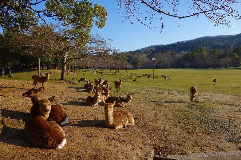 1奈良県 奈良公園_E
