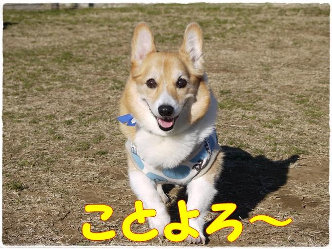 1-1P1440012.jpg