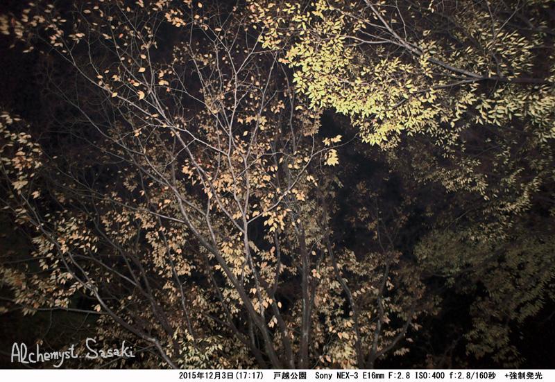 12月3日夜DSC05808