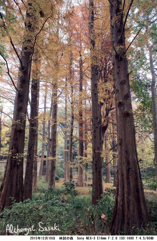 林試の森DSC06712