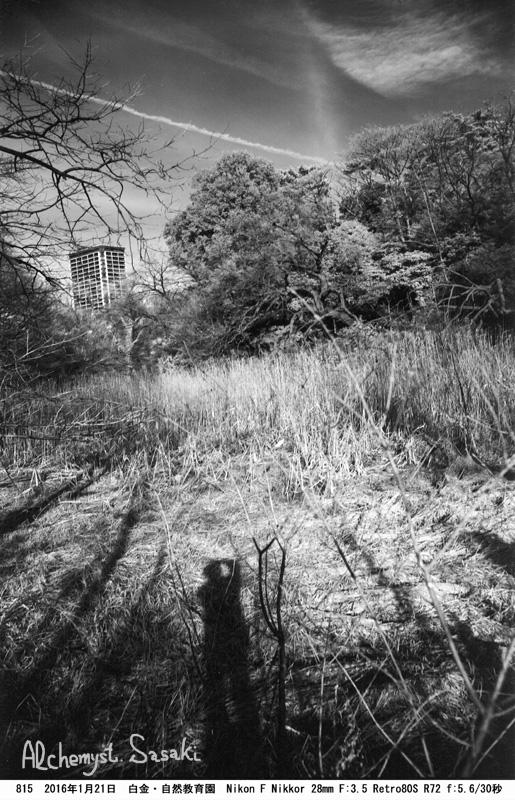 自然教育園815-35a