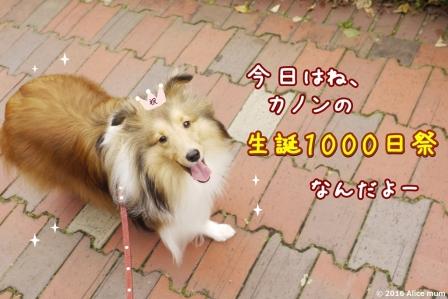 1m - コピー