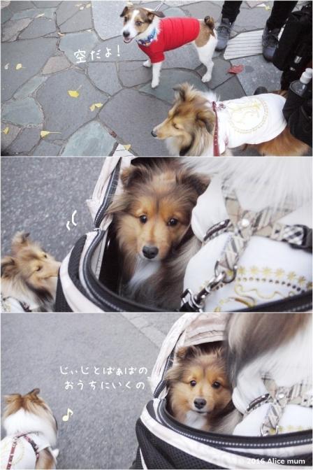 4m 12月初旬 - コピー