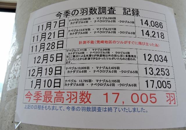 万羽鶴2016-01-10 091 (640x448) (2)