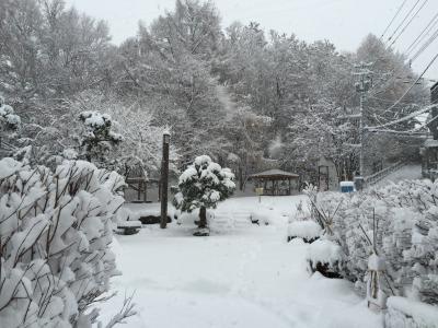 11月の雪1(南緑地)