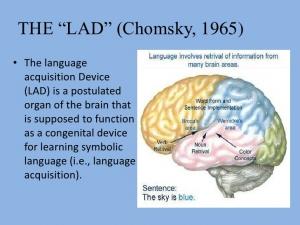 linguistic-oriented-theoriesbehaviorism-and-innatism-17-728.jpg
