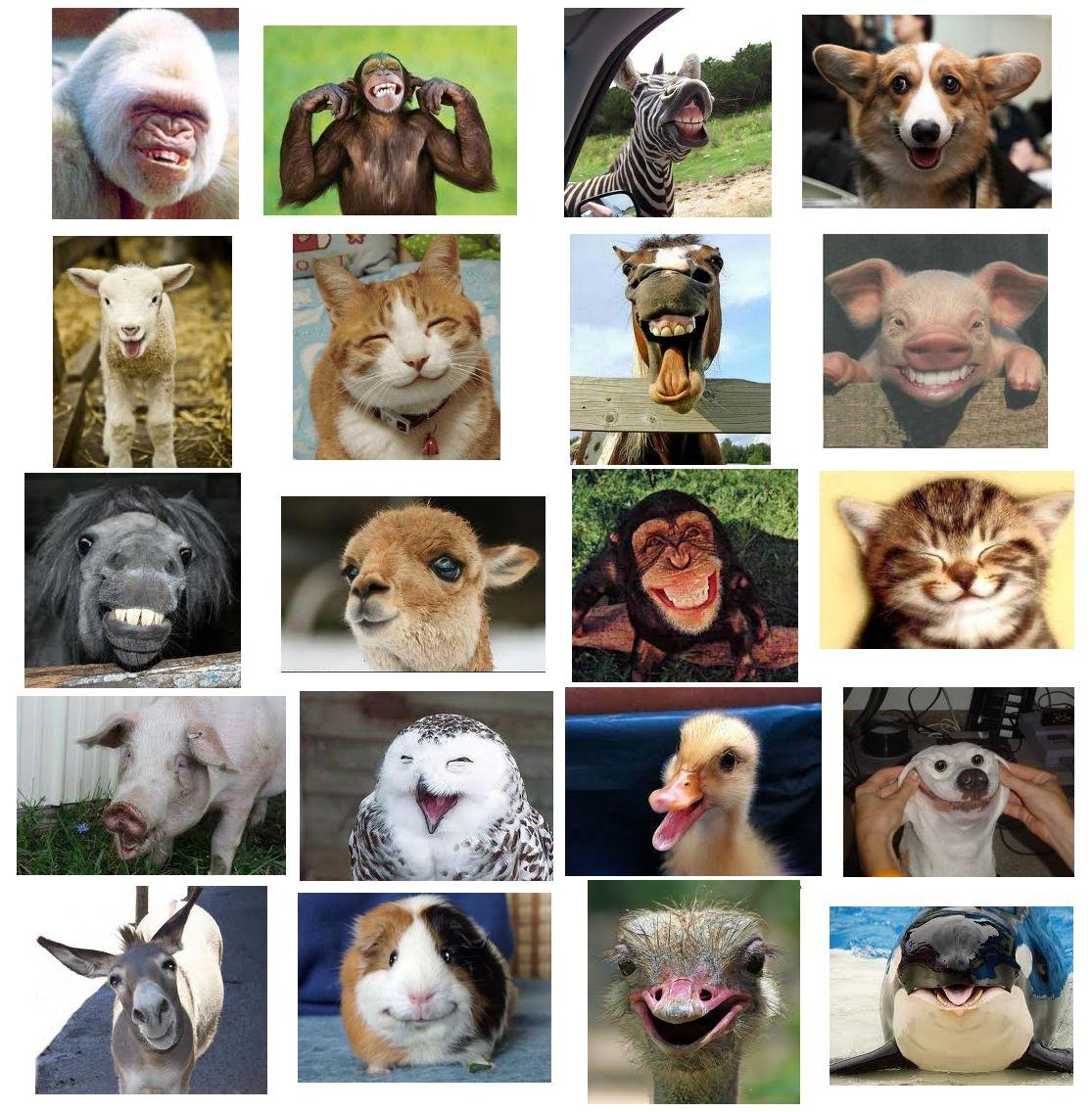 animalsmile.jpg