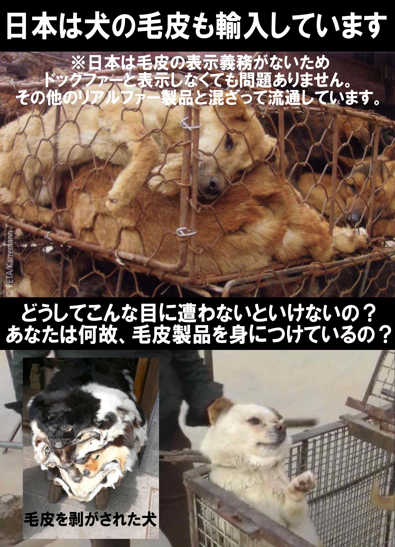inukegawa2_201512280048345cd.jpg