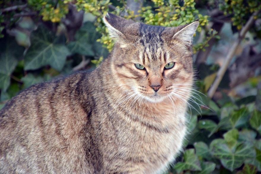 自由な猫達 (1)