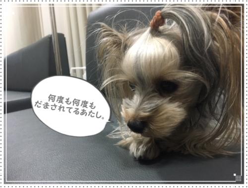 IMG_8887.jpg