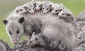 ネズミ 30