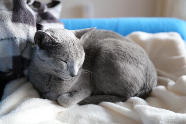 ねむねむで寝んね